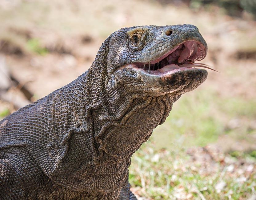 Wunderpus Liveaboard Komodo