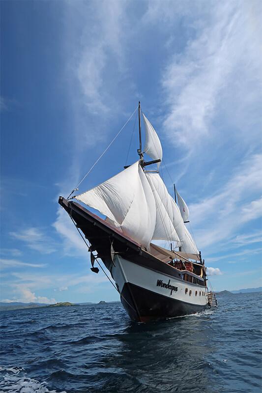 Wunderpus Under Sail